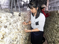 The white type Mushrooms of teen plant protection student is blooming at Nabong
